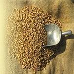 sa Willson's Gold Roast Coffee