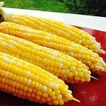 Roasted Corn Premium PD Recipe