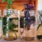 Fresh Herb Tea Premium PD Recipe